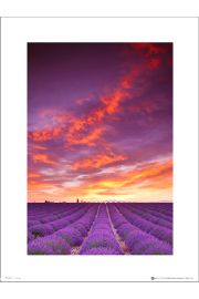 Tom Mackie Purple Field And Sky - plakat premium